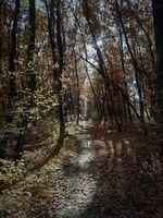 Листата, сълзите на гората!; No comments