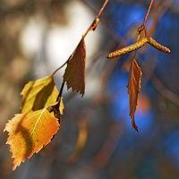 Autumn heat; comments:4