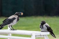 Птици; Коментари:5