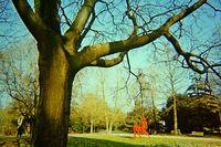 Разходка в парка; comments:5