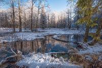 снежное утро; comments:8
