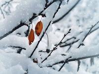 Коледна украса... :); comments:16