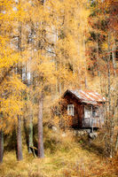 cabin in the woods; comments:3