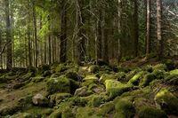 Пияната гора, Чаирите; comments:8