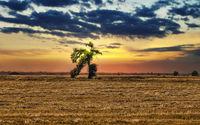 Бягащото Дърво; comments:5