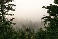 Мъгла; comments:2