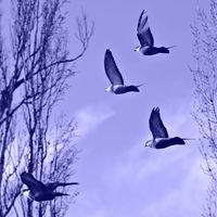 Blue flight; comments:3