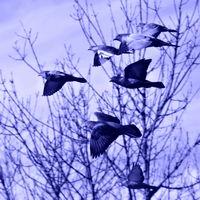 Blue flight; comments:4