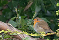 robin; comments:4