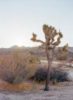 Joshua Tree, California; No comments