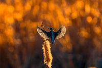Полет на рибарче ....; comments:15