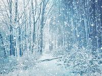 А имаше и такава зима... :); comments:15