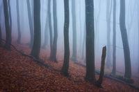 Непрогледна мъгла; comments:4