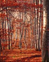 Есенни цветове; comments:2