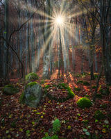 Mystical Forest; comments:4