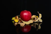 Есенна ябълка; No comments