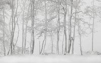 Бяла тишина...; comments:11