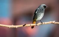 Птиче; comments:5