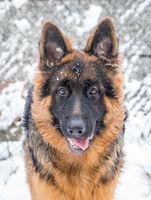 Аякс се радва на зимата; comments:12