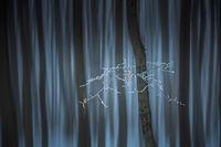 Приказна гора; comments:24
