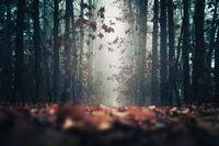 Приказна мъгла; comments:2