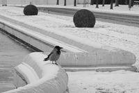 Зимно самотно...; comments:2