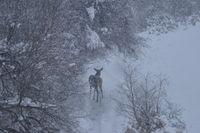 между снежинките; comments:4