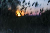 Sunset; comments:1