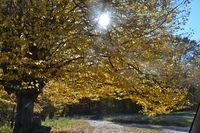 Златен ден през ноември; comments:1