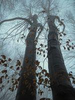 Любов в мъглива гора.; comments:5