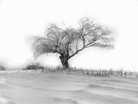 Зима; comments:6