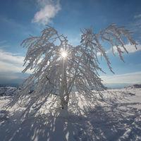 Светещо дърво; comments:6
