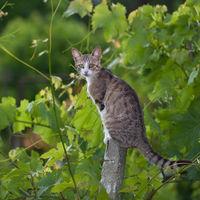 Младата котка; comments:3
