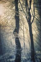 Гората и зимата; comments:2