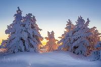Снежна утрин на Витоша; comments:8