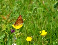 Пеперуден ден :); comments:1