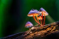 Fairy Land; comments:7