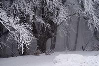 Зима; comments:16