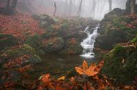 Късна есен; comments:11