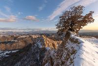 Самотното дърво; comments:4
