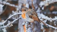 Little bird chilling like a boss :D; Коментари:2