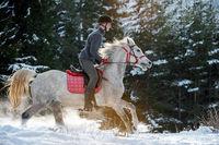 Силата и величието на коня...; comments:8