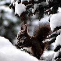 В снега; comments:18