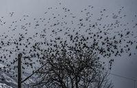 Птиците; comments:2