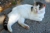 Котка - пазител на тракийската куполна гробница в Мезек; comments:1
