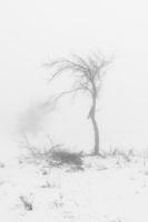 Мъгливо; comments:6