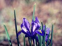 Пролетта е близо... :); comments:8