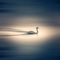 Swan lake; comments:5