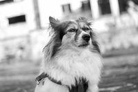 Куче в парка; comments:1