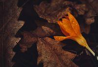 Пролетно настроение в близък план; comments:10